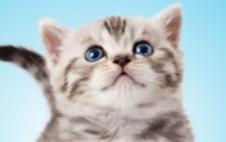 kitten_pic_1.png
