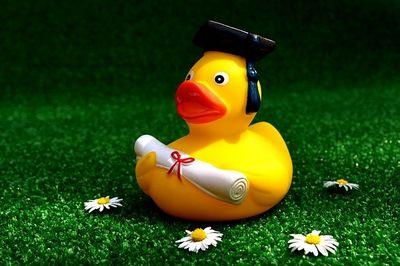rubber-duck-2821371_640.jpg