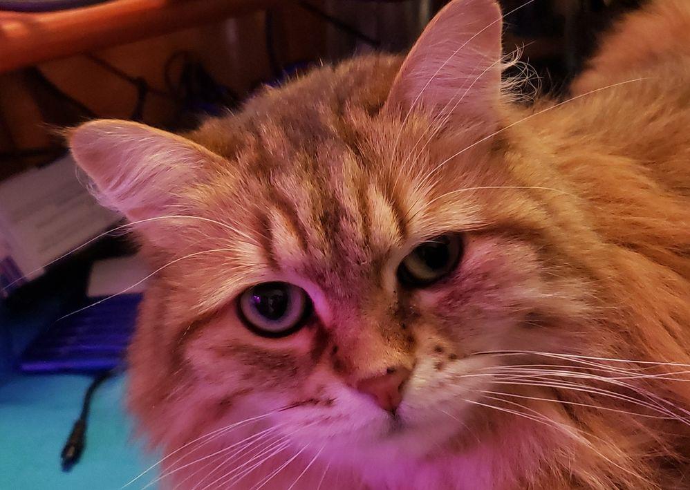 kizzy-face.jpg