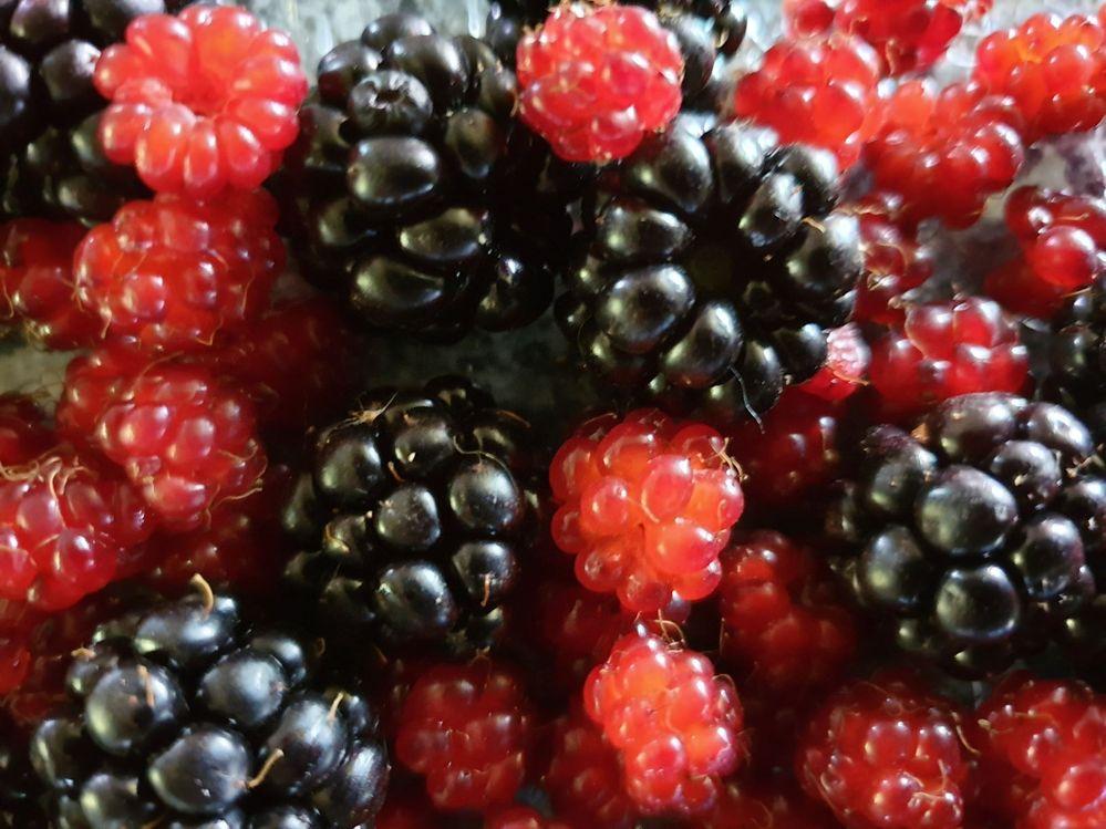20210111_173748 - berries.jpg