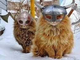 viking cats.jfif