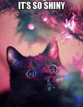 Its-so-shiny---christmas--cat-meme.jpg