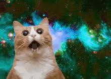 catnspace.jpg
