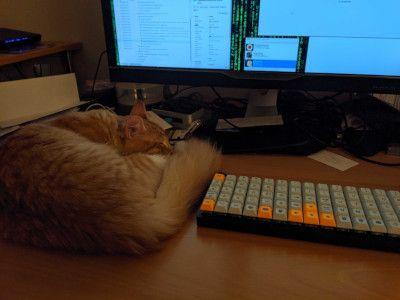 catKeyboard1.jpg