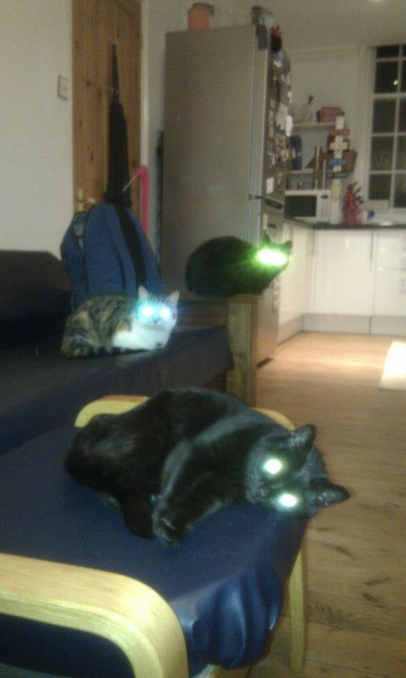 lazercats.jpg