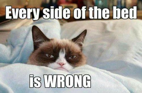 gumpy cat.jpg