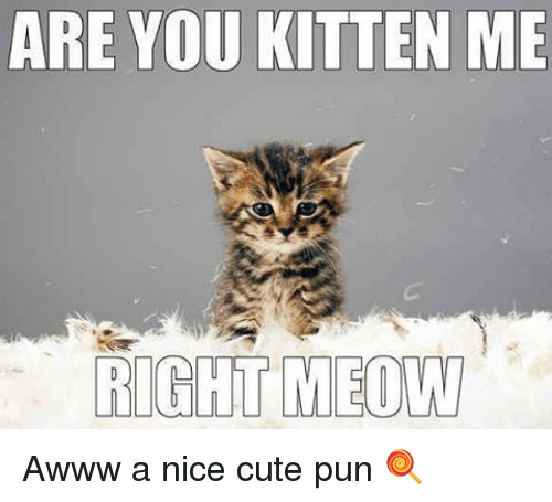 are-you-kitten-me-right-meow-awww-a-nice-cute-7635874.png